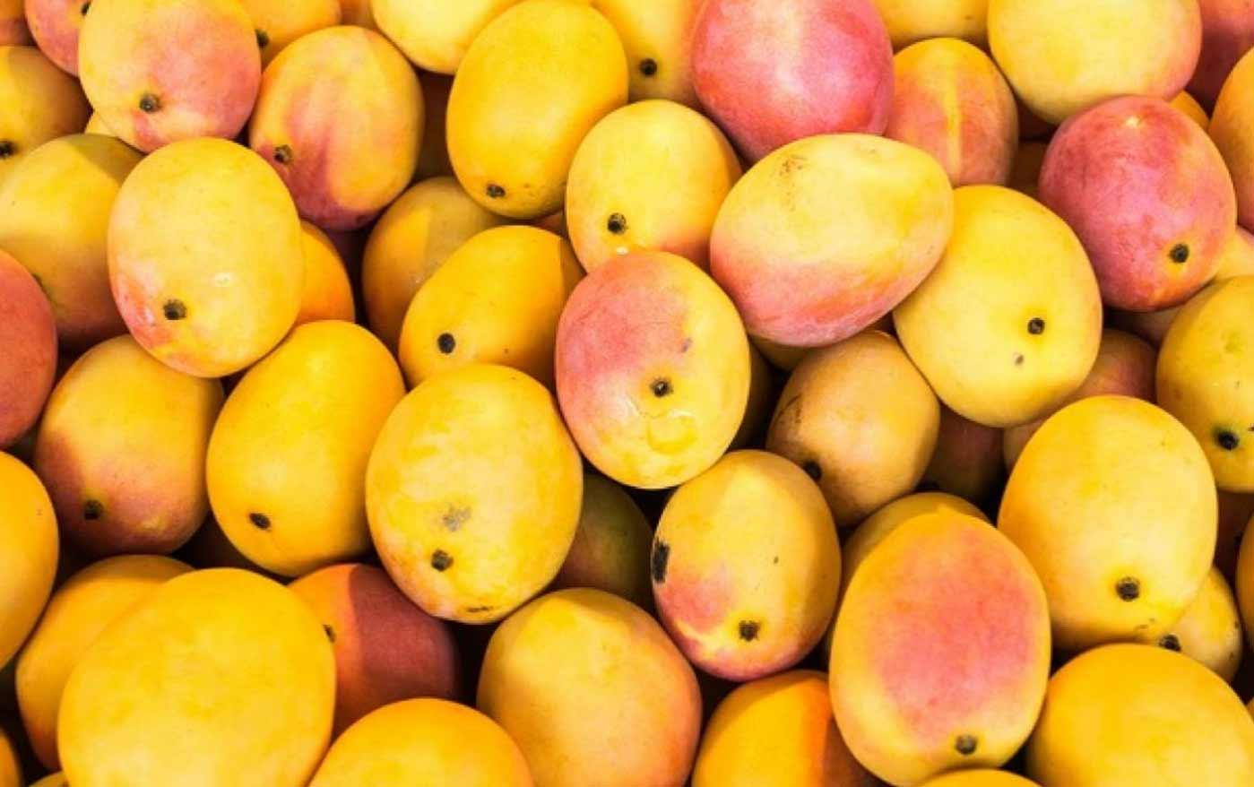 Hapus Alfanso Mango